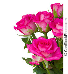 cor-de-rosa, cima, rosas