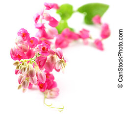 cor-de-rosa, coral, videira