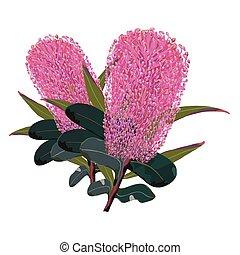cor-de-rosa, detalhado, flores, banksia