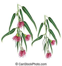 cor-de-rosa, eucalipto, folhas, flores