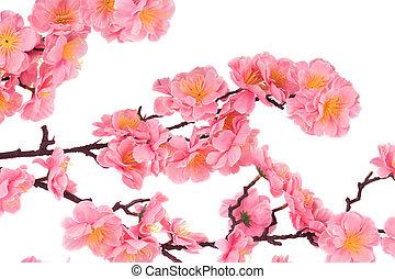 cor-de-rosa, fim, flores, cima