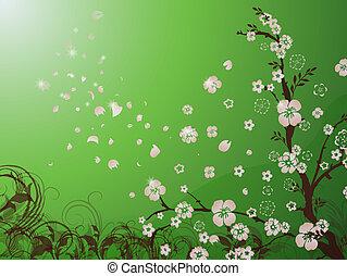 cor-de-rosa, flor cereja