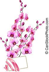cor-de-rosa, grupo, orquídeas, cartão, em branco