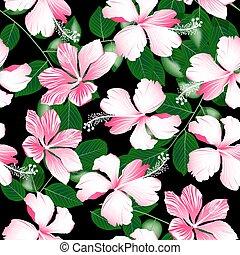 cor-de-rosa, hibisco, padrão, seamless, variegou, flores...