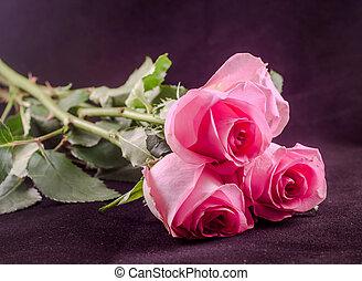 cor-de-rosa, isolado, cima, folhas, flores, rosas, verde, fim