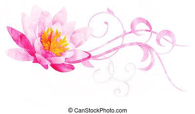 cor-de-rosa, lírio água, aquarela, ilustração, isolado,...