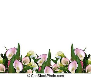 cor-de-rosa, lírios calla, borda