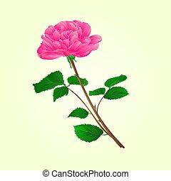 cor-de-rosa levantou-se, caule, vector.eps