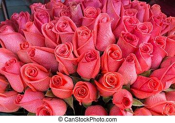 cor-de-rosa levantou-se, grupo