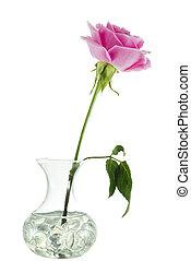 cor-de-rosa levantou-se, vaso