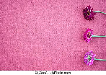 cor-de-rosa, lona, zinnias, colorido, espaço, magenta, cópia