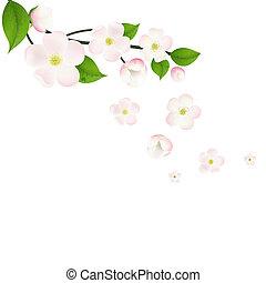 cor-de-rosa, macieira, flores, borda