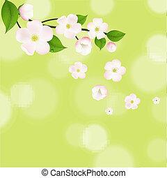 cor-de-rosa, macieira, flores, com, bokeh
