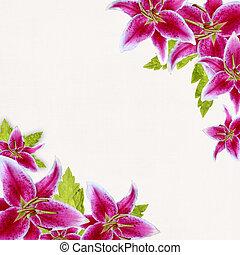 cor-de-rosa, nupcial, lírios, borda, branco, fundo