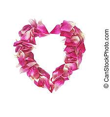 Cor-de-rosa, pétala, flores, isolado,  rosÈ