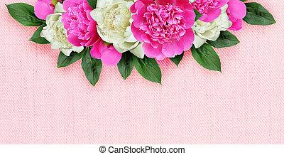 cor-de-rosa, peonies, flores brancas, fundo