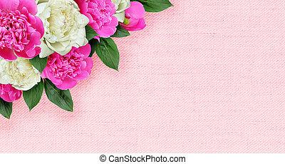 cor-de-rosa, peonies, lona, arranjo, canto, flores brancas