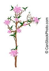 cor-de-rosa, planta, flores, ilustração