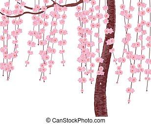 cor-de-rosa, ramos, brotos, cereja, isolado, ilustração, sakura., experiência., árvore., tronco, flores brancas