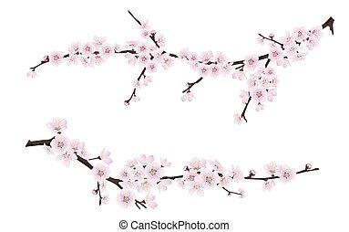 cor-de-rosa, ramos, primavera, árvore, florescer, flores
