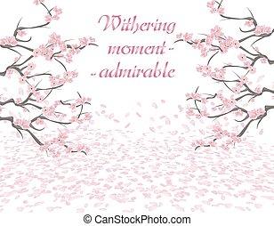 cor-de-rosa, ramos, withering., isolado, ilustração, período, experiência., flowers., sakura, branca, inscription.