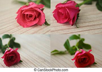 cor-de-rosa, roses.