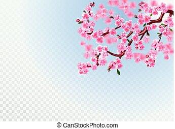 cor-de-rosa, sakura., ramos, buds., defocus, cereja, folhas, ilustração, flores, effect., experiência., transparente
