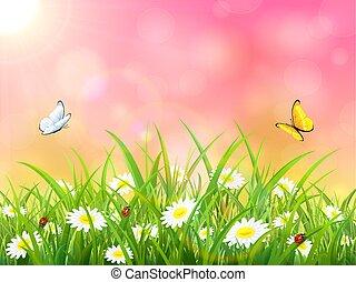 cor-de-rosa, sol, borboletas, fundo, natureza