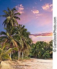 cor-de-rosa, trópicos, pôr do sol