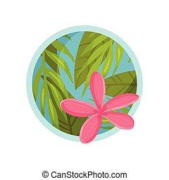 cor-de-rosa, verão, forma, flower., ilustração, grande,...