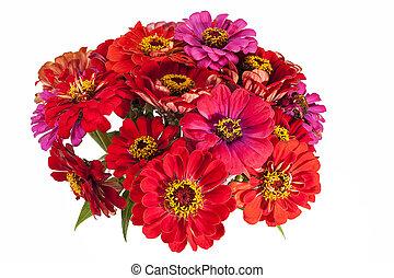cor-de-rosa, zinnia, buquet, fundo, flores brancas, vermelho