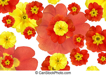 cor, flores, fundo