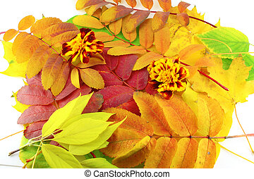 cor, outono, abstratos, folhas, fundo