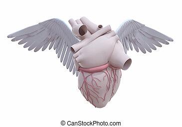 coração, asas, human