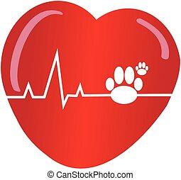 coração, branca, cachorros, fundo, pata