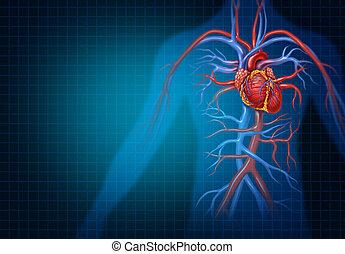 coração, cardiologia, conceito, cardiovascular