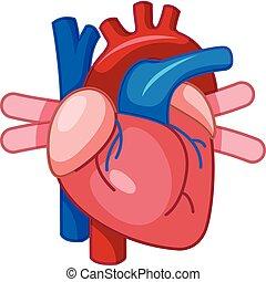 coração, caricatura, human