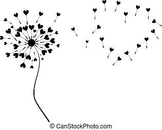coração, dandelion