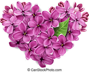 coração, de, flores, de, um, lilás