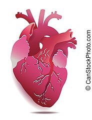 coração, experiência., isolado, ilustração, eps, realístico, vetorial, branca, 10