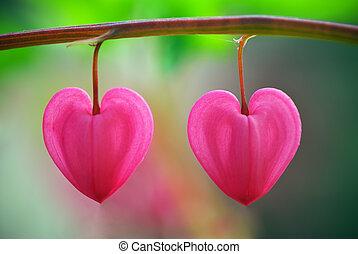 coração, flor, dois