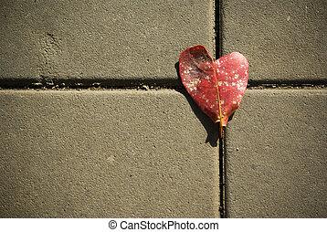 coração, folha, estrada