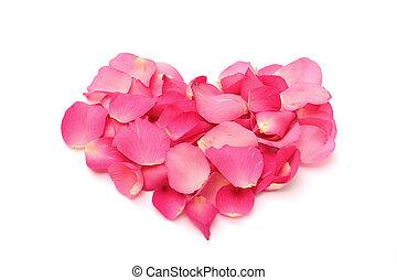 coração, forma, pétalas rosa, fundo, branca