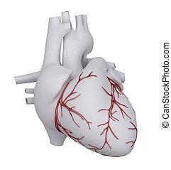 coração, human, cardíacas