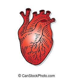 coração, mão, illustration., human, desenho