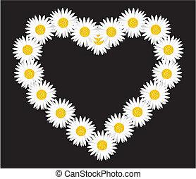 coração, margarida flor