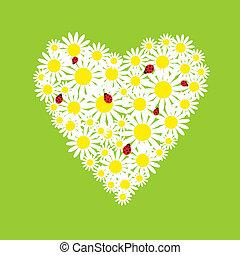 coração, margaridas, ladybirds