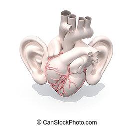 coração, orelhas, human, órgão, grande