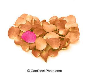 coração, pétalas, forma, forma, rosa