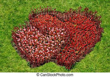 coração, símbolo, flores, capim